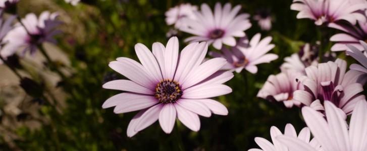fleurs_amc_2016